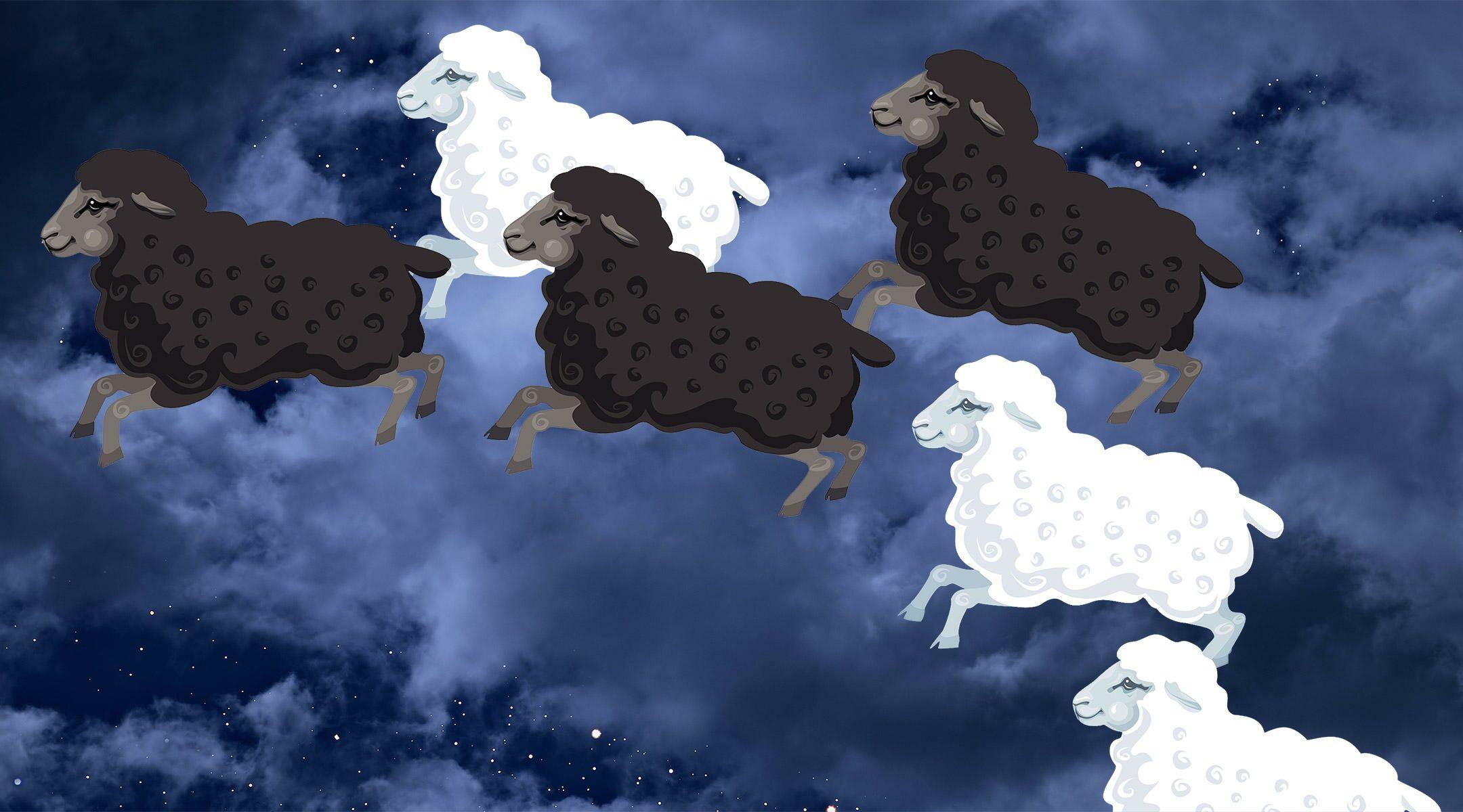 counting sheep at night because hard time sleeping