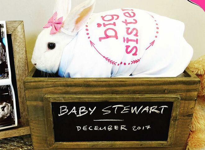 pregnancy-announcement-cute-rabbit