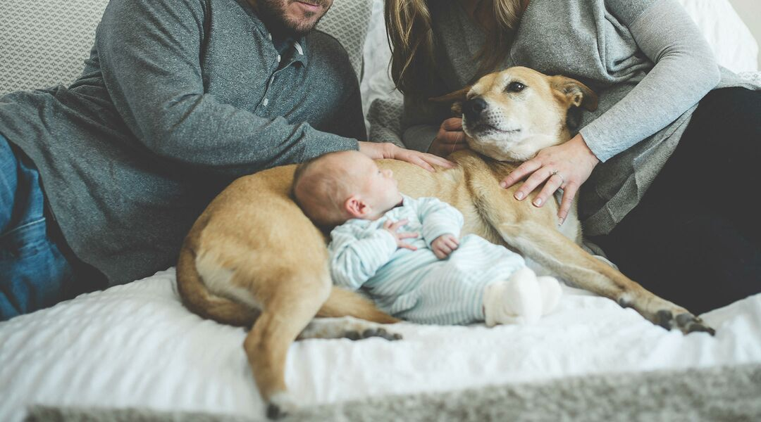 Baby With Dog And Parents