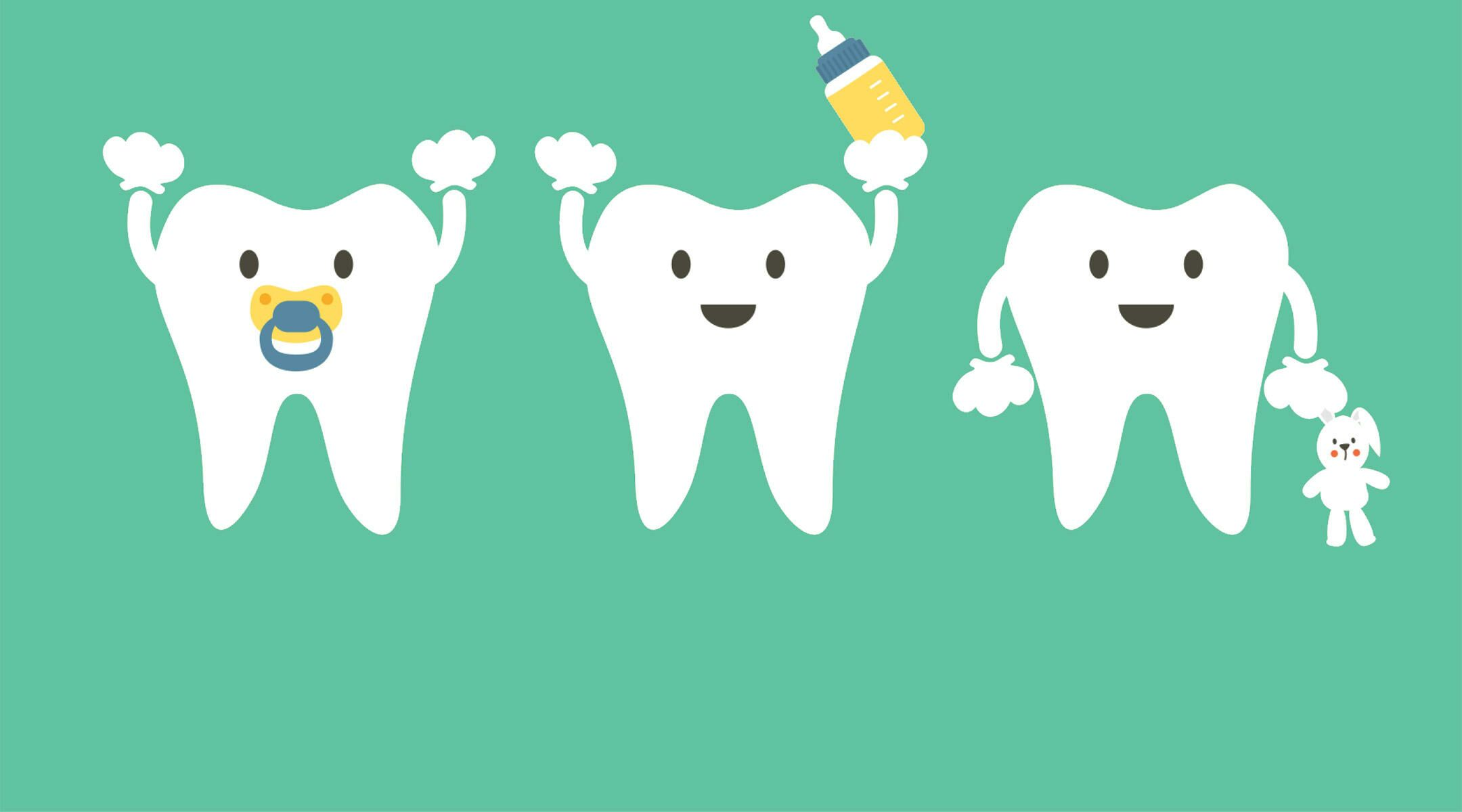 Tool teething chart baby teeth illustration ccuart Image collections