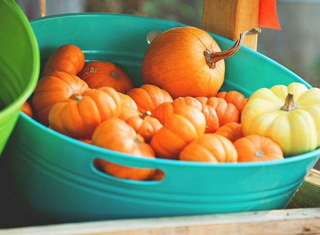 easy-halloween-games-pumpkins