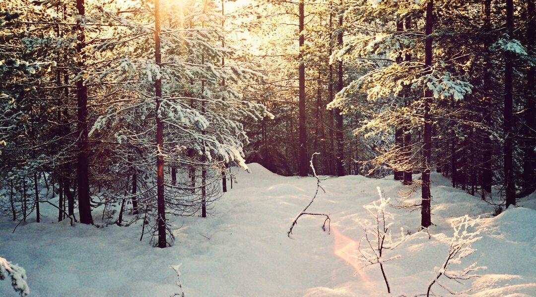 Snowy woods in sunlight