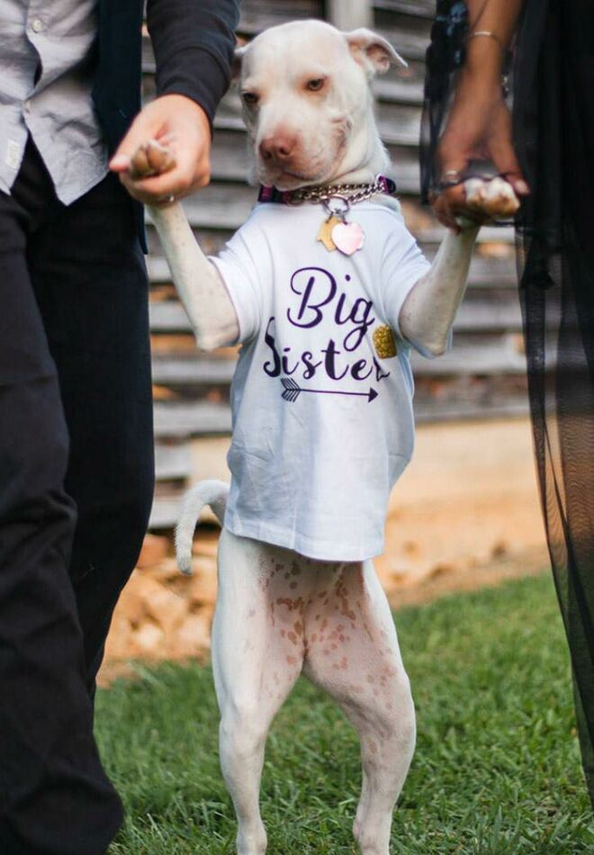pregnancy-announcement-cute-dog-big-sister