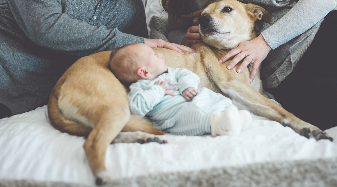 newborn baby nestled with pet dog