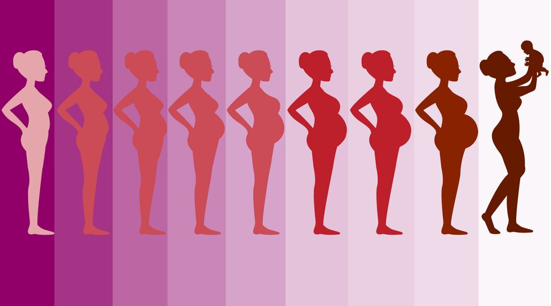 Graphic of a woman's body changing during pregnancy