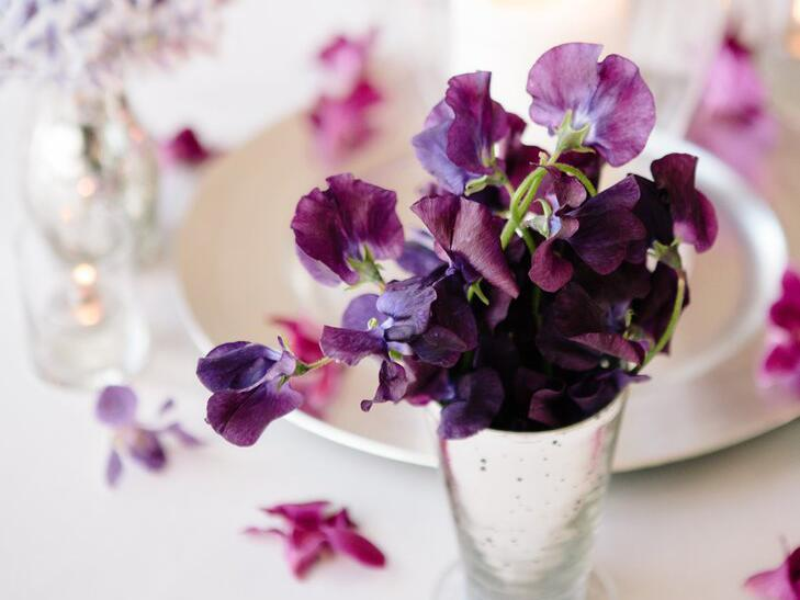 Purple sweet pea in a silver vase