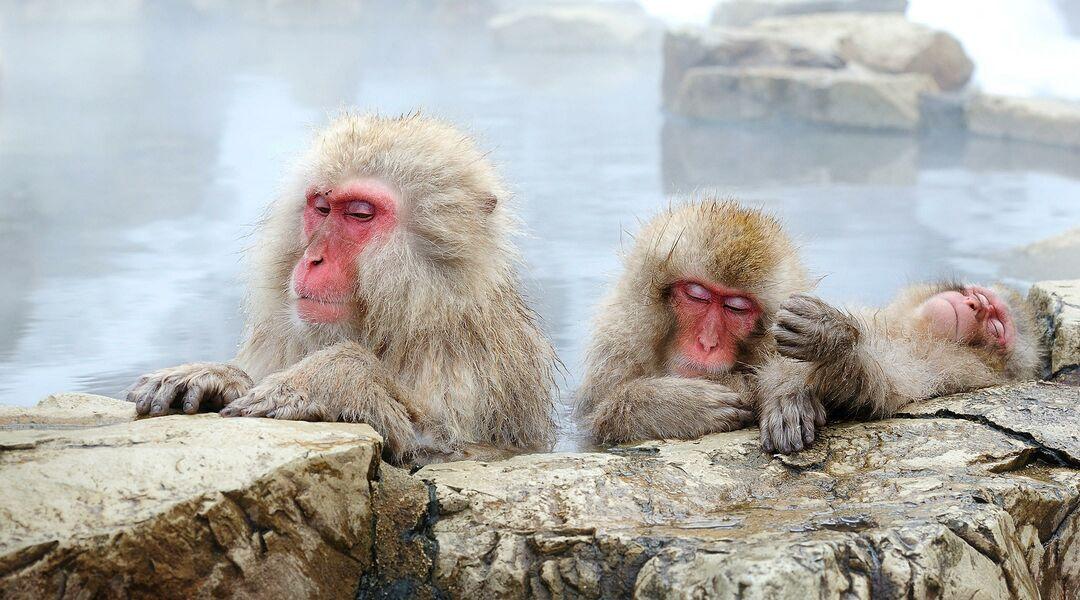 snow monkey de-stress bath